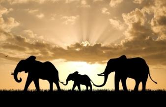 elephant-attachment-00